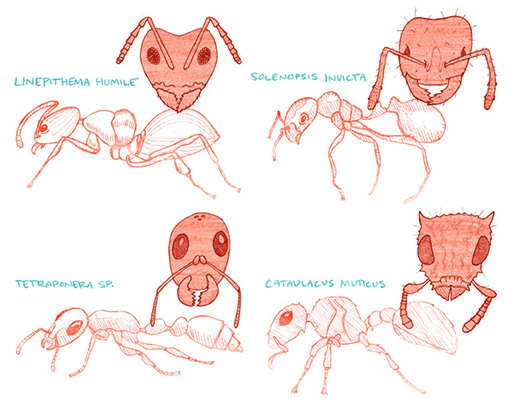 ESR-ant-survival-4-blog